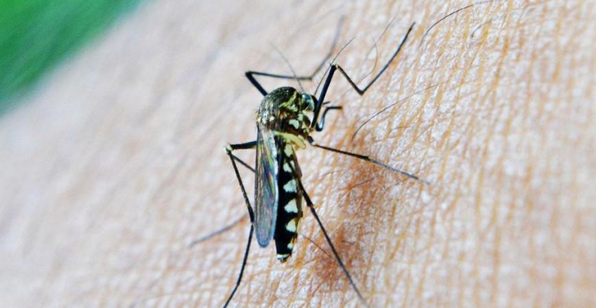 Matar mosquitos, guía definitiva para acabar con ellos